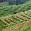 Terraced rice field after — Stock Photo