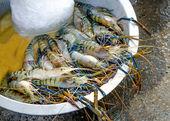 Crevettes fraîches sur le marché — Photo