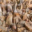 Petrified Wood — Stock Photo #38494411