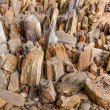 Stock Photo: Petrified Wood