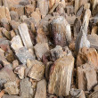 Petrified Wood — Stock Photo #38494841