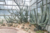 Globe shaped cactus with long thorns in green house — Stock Photo