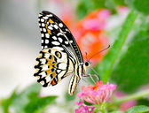 Beautiful of butterfly in garden — ストック写真