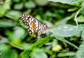 Beautiful of butterfly in garden — Stock Photo