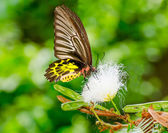 Beautiful of butterfly in garden — 图库照片