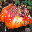 Mushroom with Red Spots — Stock Photo #18952719