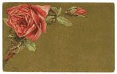 Vintage Roses Background Greeting Card — Stock Photo