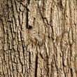 Royalty-Free Stock Photo: Tree Bark Background Texture