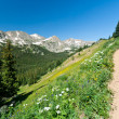Stock Photo: Trail Climbs Through Mountain Wildflowers