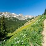 Trail Climbs Through Mountain Wildflowers — Stock Photo