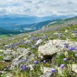 Stock Photo: Colorado Wildflowers Mountain Landscape in Summer