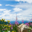 Stock Photo: Flowers Blooming in Mountains Landscape