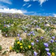 Colorado Flowers Mountain Landscape in Summer - Stock Photo