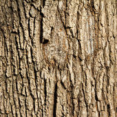 Tree Bark Background Texture — Stock Photo