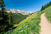 Trail Climbs Through Mountain Wildflowers — Foto de Stock