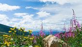 鲜花盛开的山景观 — 图库照片