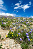 Colorado Flowers Mountain Landscape in Summer — Stock Photo