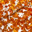Colorful Fall Leaves Background Texture — Stock Photo