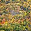 Colorful Fall Forest Background Texture — Photo
