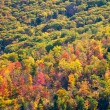 Colorful Fall Forest Trees Background Texture — Stock Photo
