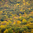 Fall Forest in New York Background Texture — Stock Photo
