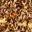 Dead Leaves Background Texture — Stock Photo