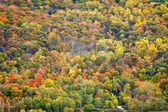 Colorful Fall Forest Background Texture — Stock Photo