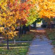 Fall Trees above City Sidewalk - Denver Colorado — Stock Photo