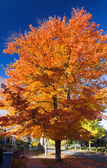 Tall Colorful Fall Tree Along City Street — Stock Photo