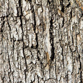 Wood Tree Bark Background Texture — Stock Photo