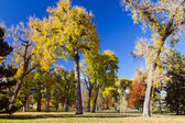 Sunny Fall Day in the Park — Stockfoto
