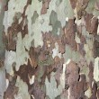 Tree Bark Background Texture — Stockfoto