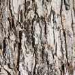 Wooden Tree Background Texture — Stock Photo