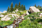 Colorado Waterfall and Wildflowers Landscape Scene — Stock Photo