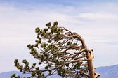 Vind svepte träd — Stockfoto