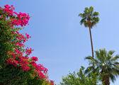 Flores y palmeras tropicales — Foto de Stock