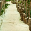 Pathway - Stockfoto