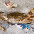 Stock Photo: Secrab
