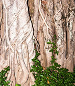 Tree roots. — Stock Photo