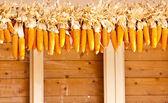 Many corn. — Stock Photo