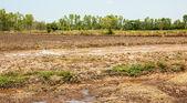 V pěstování rýže. — Stock fotografie