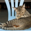Cat on chair — Stock Photo
