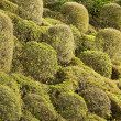 Stock Photo: Shrubs of trees.