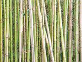 Pared de bambú — Foto de Stock