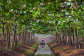 Agriculturist watering grapes in garden — Stock Photo