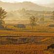 View of traditional farm in nort of Thailand — Stock Photo #19696721