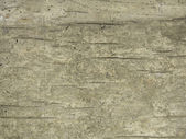Grunge background old cracking wood — Stock Photo