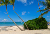 Palm trees on the tropical beach — Stock Photo