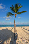 Palm on caribbean beach with white sand — Stock Photo