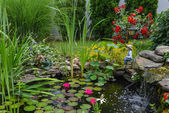 Water pond — Stock Photo
